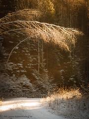 20171115003631 (koppomcolors) Tags: koppomcolors forest skog winter vinter snö snow