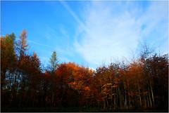 DSC_1902 (FMAG) Tags: 2017 żabieniec zalesie jesien