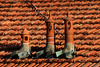 Chimneys (Alfredo Liverani) Tags: 7dayswithflickr 7dwf freetheme 3242017 project365324 project365112017 project36520nov17 oneaday photoaday pictureaday project365 project project2017 2017pad canon40d canon 40d flickr digital camera cameras