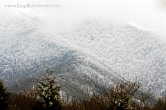 Blue Ridge Mountains in the Snow (Greg Reed 54) Tags: virginia blueridgemountains winter devilsbackbonebrewery nelsoncounty trees mountain mountains mist fog foggy