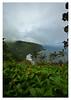 Waipio Valley, Big Island, Hawaii (danny wild) Tags: fog hawaii aloha 808 bigisland waipio