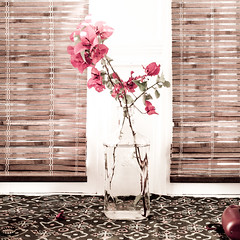 bougainvillea in a bottle