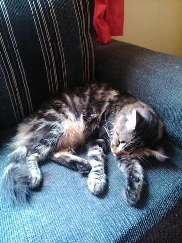Sonequinha no Sofa