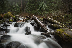 How It Flows (John Westrock) Tags: nature water longexposure river trees forest rocks logs washingtonstate pacificnorthwest canoneos5dmarkiii canonef2470mmf28lusm