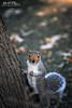 Who, me? (Hi-Fi Fotos) Tags: squirrel cute animal tree furry friend pose portrait woodland mammal woods forest bokeh nikkor 105mm micro nikon d7200 dx hififotos hallewell
