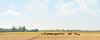 Panorama (asifshifat) Tags: as asif shifat photography panorama landscape bangladesh beauty nature sky cloud green sylhet