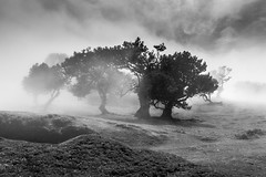 Wonders of Nature - Explore # 94 (**capture the essential**) Tags: 2017 fog insel island laurel lorbeer madeira mist nebel pauldaserralowlands sonye18200mmoss sonynex7 wetter wolkenclouds foggy
