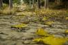La Tardor (the nenuco 123) Tags: autumn otoño tardor marron verde nikon d5300 1855mm largaexposicion arasdelosolmos valencia spain amarillo yellow