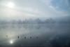 FOG (iLaura_) Tags: fog nebbia landscape panorama sestocalende
