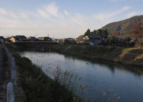 afternoon Asozu River ducks