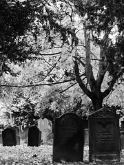 Jüdischer Friedhof (four-hearts) Tags: judenfriedhof jüdischerfriedhof heiligersand worms wo rheinhessen rheinlandpfalz blätter laub herbst schwarzweis grabsteine gräber