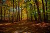 Le sentier des couleurs (perfectday_s) Tags: explore foliage feuillage couleur automne parc montsaintbruno canon5dmarkii canon