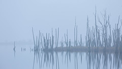 Novembernebel (IIIfbIII) Tags: fog mist nebel dust autumn herbst november anklamerstadtbruch mecklenburg vorpommern anklam msg trees bäume nature water lake canon