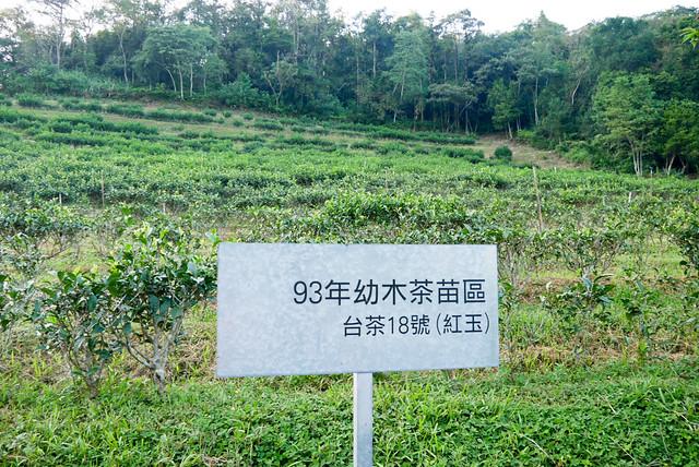 南投日月老茶廠-1130088