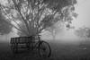 Foggy day in Ishwardi (Hiro_A) Tags: fog foggy tricycle ishwardi bangladesh monochrome bw blackwhite sony rx100m3 asia