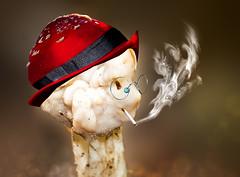 New species : Spectacled Smook-fungus  / Gebrilde Rookzwam (kunstschieter) Tags: fungus zwam springtail springstaartje