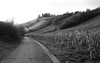 Trier/Olewig (Denkrahm) Tags: trier olewig germany wine vineyards mosel