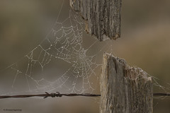 Foggy morning (shimmeringenergy) Tags: web fog naturesartwork canoneos7dmarkii ef100400f4556lisiiusm richmondbc