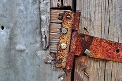 Hanging (holly hop) Tags: centralvictoria victoria australia abandoned empty derelict decay ruraldecay ruins walls corrosion corrugatediron rust rustyandcrusty tin door wooden hinge screws rustybolt