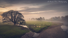 A View Of Lazonby (.Brian Kerr Photography.) Tags: cumbria landscapephotography lazonby rivereden photography edenvalley tree trees nature outdoor outdoorphotography opoty onlandscape mist mistymorning weather cold coldmorning sheep animal sky sunrise photo briankerrphotography briankerrphoto landscape