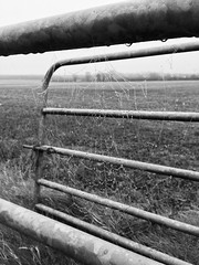 Greyness (Explored) (JulieK (thanks for 8 million views)) Tags: bw monochrome wexford fence cobweb hww web bokeh focus nature iphonese ireland irish landscape hff