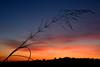 silhouette (luporosso) Tags: natura nature naturaleza naturalmente nikon nikonitalia nikond500 imdifferent tramonto sunset sabina montopolidisabina colors colori controluce backlight
