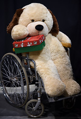 Teddie's Offering To Bring Joy To a Child (Anthony Mark Images) Tags: teddybear love giving sharing cute sweet hope wheelchair stuffedanimal toy occ operationchristmaschild warehouse guelph ontario canada loveforchildren nonprofitorganization internationalrelief adorable