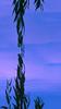 Reflections II : Errant Symmetry (theReedHead) Tags: thereedhead milwaukeephotographers wisconsinphotographers fujifilmfinepixs1 reflections reflectionsinwater waterreflections bluebackground realism treebranch treebranches milwaukee wisconsin veteransparkmilwaukee milwaukeelakefrontduckpond