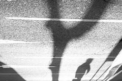 (LeoF95) Tags: photoderue monochrome street calle rue noiretblanc blancoynegro blackandwhite streetpoetry streetphotography