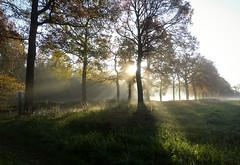 A beautiful morning (joeke pieters) Tags: 1370269 panasonicdmcfz150 woold winterswijk achterhoek gelderland nederland ochtend morning mist zonnestralen sunrays bomen boom tree trees landschaft landschap landscape paysage ngc npc platinumheartaward