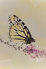 Happy Weekend! (re <be>) Tags: auckland beautyinnature blossom butterfly closeup daintiness delicacy fangchinglee flowers fresh garden gentle grace insect multipleexposure nature newzealand nostalgia orange pastel plant selectivefocus soft softcolor spring thrive vintage violet wings youthful