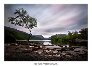 Lone tree, Llyn Pardarn llanberis