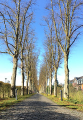 Alley (roomman) Tags: 2017 germany schloss castle krickenbeck chateau form chateauform training building nature landscape nice beautiful excellent nettetal nrw nordrheinwestfalen nordrhein westfalen garden park alley hotel chateuform road tree grass sky centre old historu historic venlo heide forest trees