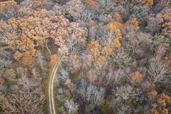 Last Fall Colors (jeff_a_goldberg) Tags: aerialphotography lcfpd drone dji mavic forest nature lakewood illinois lakecountyforestpreservedepartment lakewoodforestpreserve fall mavicpro djimavicpro wauconda unitedstates us