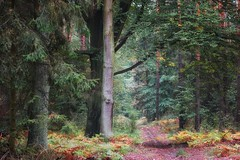*** (pszcz9) Tags: polska poland las forest przyroda nature dolinabaryczy baryczvalley droga road drzewo tree pejzaż landscape jesień autumn beautifulearth sony a77 samyang