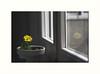 Reflejo solitario (juan jose aparicio) Tags: tiesto flor flower window reflect reflejo ventana pot color patio