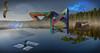 ill    usions.                please enlarge (4 ALL) Tags: peter bjärterot illusion photoshop manipulated creations art water stars blue morning tree fog bird boat
