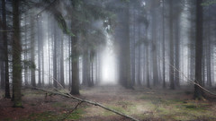 Forest (a.penny) Tags: wald fog nebel dust apenny nikon aw120 coolpix mist forest woodland wood foggy explore