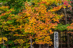 All the Rage (satdishguy) Tags: autumn newhampshire leaves lincolnnh
