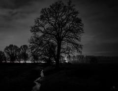 Black Tree (st.weber71) Tags: nikon nrw niederrhein natur nightshot nightlights nacht nachtfotografie nachtaufnahme night nachts nachthimmel deutschland d850 himmel hünxe schwarzweis bäume blackandwhite bach bachlauf feld langzeitbelichtung lzb lichter landschaft landscape wolken wasser