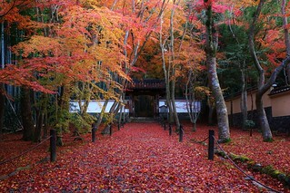 Fallen Leaves / 京都 竹の寺 地蔵院 Kyoto Bamboo Temple Jizo-in