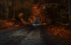 Enchanted Forest (Carolyn Little (Off until January)) Tags: forest fantasy enchanted woods road textures leaves magical autumn colours orange landscape novascotia magicunicorntheverybest ie