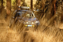 2012 Subaru Forester (donaldgruener) Tags: sh forester subaru forest offroadlights rallyinnovations