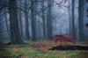 Little red tree (SimonLea2012) Tags: infocus lowcontrast mediumquality