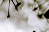 DSC_7519 (jonnyherb) Tags: nature blured blurred blury flower tree outside ends