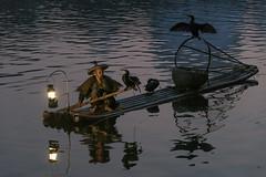 Life partners (tmeallen) Tags: fisherman bambooraft lantern earlymorning cormorants wingsspread fishingbirds partners xingping guilin guangxiprovince china