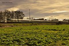 Invio Diesel (dariooliva84) Tags: trains diesel d445 mercitalia puglia granconfort carrozze gioia del colle casal sabini railway