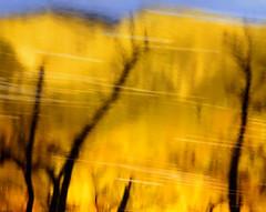 Golden Glen (CactusD) Tags: glennevis glen nevis bennevis ben waterofnevis river mountains mountain trees tree waterside gold woodland water reflection reflections scotland autumn colour autumncolour greatbritain great britain nikon d800e fx texture uk unitedkingdom gb landscape intimatelandscape detail film 5x4 4x5 details fuji fujichrome provia provia100f largeformat large format digitized linhof technikardan tks45 s45 fujinont400mmf8 fujinon 400mm f8 tilt shift tiltshift movements pce 85mmf28pce 85pce 85mm f28