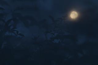 always a moon (6)