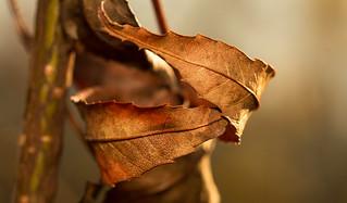 Autumn Hug